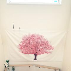 桜/桜タペストリー/春のフォト投稿キャンペーン
