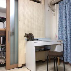 有孔ボード/安全対策/ねこと暮らす 猫ケージと机の場所を入れ替える為にリビン…