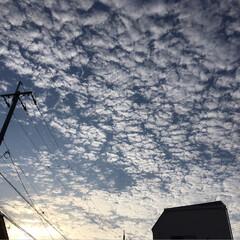 ひつじ雲/クリスマス2019/リミアの冬暮らし/おでかけ ☀️朝からひつじ雲❓うろこ雲❓ がいっぱ…
