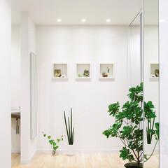 ミニッチ/壁埋め込み/観葉植物/小物/キッチン/廊下/... 玄関や廊下、キッチンなどのデッドスペース…