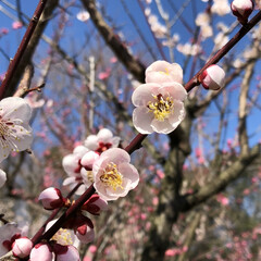フォロー大歓迎/風景/小さい春 梅のいい香り♡ #雌岡山