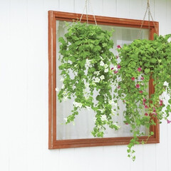 インテリア/グリーン/ボタニカル/観葉植物/グリーンカーテン/サントリーフラワーズ/...