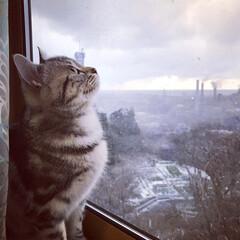雪/猫のいる部屋/猫のいる風景/猫のいる暮らし/猫/フォロー大歓迎/... 🐱ママ、雪が降ってきたよ❄ 桃ちゃんにと…