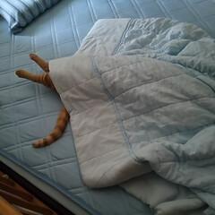 茶トラ/ペット/猫/にゃんこ同好会/おやすみショット 去年の夏頃撮った写真ですが、 ちょっと笑…