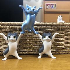 ガチャ/茶トラ/猫と暮らす/猫好き ガチャで可愛い🐱ネコフィギュアGET!!…(2枚目)