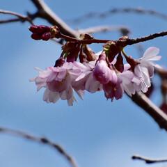 桜/大阪城公園/カメラ女子/春/LIMIAおでかけ部/フォロー大歓迎/...