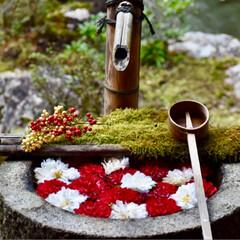 京都/柳谷観音/初詣/あけおめ/フォロー大歓迎/冬/... 柳谷観音にて初詣がてら、お正月限定の手水…