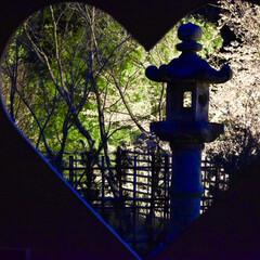 カメラ女子/桜/ライトアップ/正寿院/宇治田原/京都/... 正寿院の桜のライトアップが当選したので、…