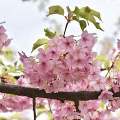 春/LIMIAおでかけ部/フォロー大歓迎/おでかけ/春の一枚/淀水路/...