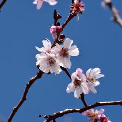 春/桜/大阪城公園/カメラ女子/LIMIAおでかけ部/フォロー大歓迎/...