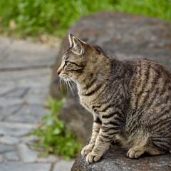ねこ/カメラ女子/京都/春のフォト投稿キャンペーン/平成最後の一枚/フォロー大歓迎/... 人懐っこい猫でした🐈❤
