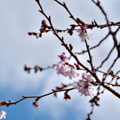 大阪城公園/桜/カメラ女子/春/LIMIAおでかけ部/フォロー大歓迎/...