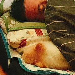 おやすみショット お兄ちゃんと一緒