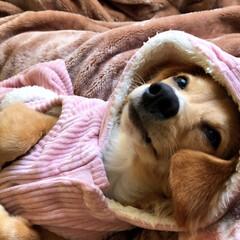 犬/ファッション/ワンコ同好会/おうち/ペット 寒いのでフード付の お洋服で防寒対策★な…(1枚目)