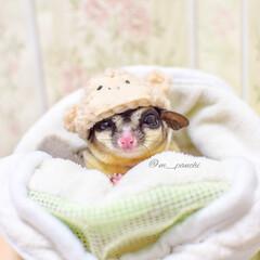帽子/さる/かわいい/うちの子ベストショット/癒し/小動物/... アイコンの写真は、 申年🐵の時に作ったお…
