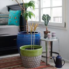 主婦/自然派/自然/インテリア/観葉植物/植物/...