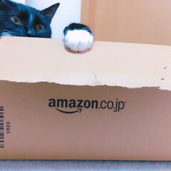 ねこ/ダンボール/Amazon/配達/クリスマス/プレゼント/... Amazonからのクリスマスプレゼントは…