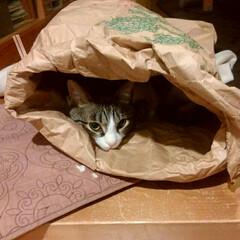 そら/米袋/猫/にゃんこ同好会 暗くて狭いとこ、好きやなぁ😆