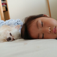 昼寝/むすめ/娘ちゃんと/ペット/犬 娘よりも8才年上のガードマン犬。 いつも…