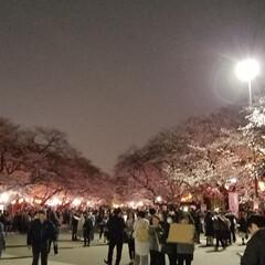 花見/さくら/フォロー大歓迎/風景/春の一枚 上野の桜 皆  桜を見上げながら、写真撮…