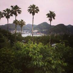 ヤシの木/フォロー大歓迎/風景 鹿児島/坊津歴史館の近くから見える ヤシ…