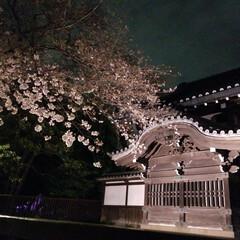 花見/さくら/フォロー大歓迎/風景/建築/春の一枚 仕事帰り、上野より自宅へ向かう途中  国…
