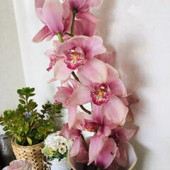 花のある暮らし ボリューム感たっぷりのお花をサービスで頂…