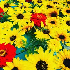 花に癒される/花好きな人と繋がりたい/浮き花/おでかけ 浮き花が涼しげでした🌼*・ 向日葵  マ…(1枚目)
