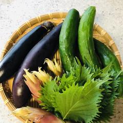 夏の食べ物/山形のだし/野菜の収穫 山形のだし🌿🌿🌿  実家からみょうがを貰…
