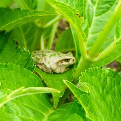 カエル/庭づくり/フォロー大歓迎/至福のひととき/風景 休日の朝~🍀 忙しい毎日にホッとする時間…