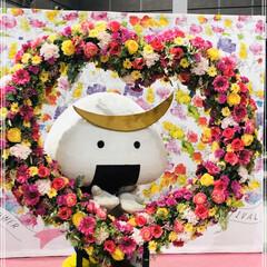 バレンタイン2020/おでかけ 昨日のむすび丸♥️ 元気貰えるカラフル花…(1枚目)