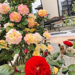 花のある暮らし/ガーデニング/復興海鮮丼/齋春商店/松川浦/ドライブ 午前中天気がいいので松川浦までドライブ🚗…(2枚目)