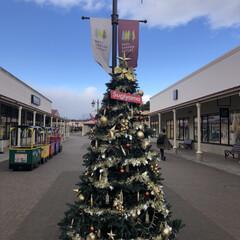 クリスマスツリー集めてみた/那須旅行/クリスマス/クリスマスツリー クリスマスツリー🎄🎅🎁🎄  那須ステンド…(4枚目)