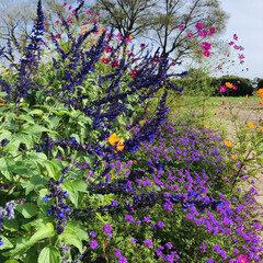 仙台広瀬川河川敷/季節の花達/お散歩/おでかけ お散歩で見つけた花達💜❤💙💚  河川敷に…