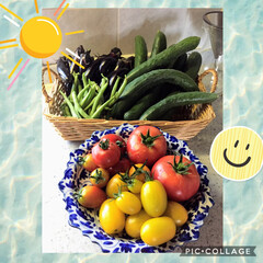 収穫野菜/フォロー大歓迎 今朝はちょっと早く起きちゃったので野菜を…
