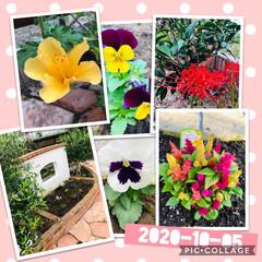 花のある暮らし 庭の花達🌼*・  彼岸花を植え替えしたら…
