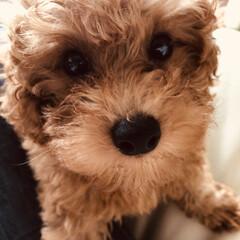 ワンコのいる暮らし/犬 リン🐩🐾の初めてのお手入れ(爪切りなど)…