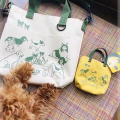トイプードル/犬の日/kaldi/おさんぽバッグ 昨日犬の日発売のKALDIおさんぽバッグ…
