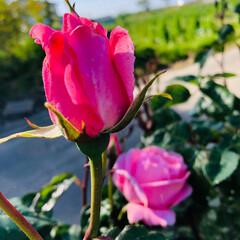 庭づくり/至福のひととき/わたしのお気に入り