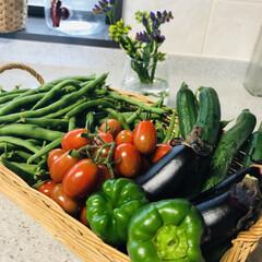 夏野菜/朝仕事/野菜作り/無農薬/朝取り野菜 今朝の収穫🍅🍆🥒 いんげんが沢山なってて…