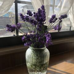庭のある暮らし/ガーデニング/リビング/ダイソー 庭の花🌼🌸  倒れてるラベンダーを花瓶に…