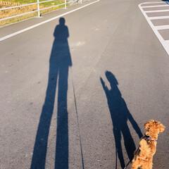 秋を楽しもう/わんこ同好会/トイプードル/お散歩 夕方お散歩🐾 秋を感じながら🍁🍂🍃 夕日…(1枚目)