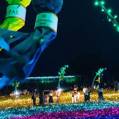 ひまわりの天の川/光と花のコラボレーション/サマーイルミネーション✨/フォロー大歓迎/至福のひととき/LIMIAおでかけ部/... サマーイルミネーション✨ 今年のテーマは…