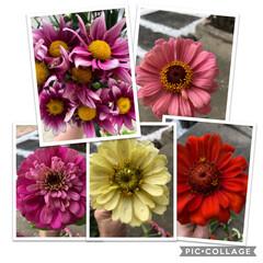 感謝の気持ち/お花のプレゼント/ご近所さん 昨日ご近所さんより頂いたお花を並べたよ🌼…
