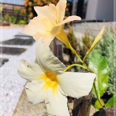 庭づくり/サンパラソル/至福のひととき/風景 おはようございます(*´▽`*)ノ)) …