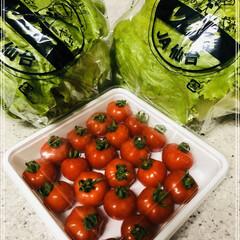 お野菜/感謝/ご近所さん/暮らし 仕事から帰ってきたら勝手口にお野菜が置い…
