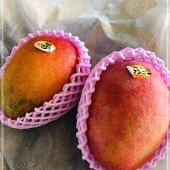 至福のひととき/この時期の楽しみ/果物/嬉しいプレゼント/毎年恒例/マンゴー/... 立派なマンゴー届きました❣️ 沖縄の親戚…