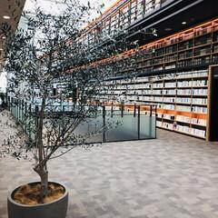気分転換/スタバ秋メニュー/読書の秋 図書館の雰囲気が好きです︎💕︎💕 静かな…