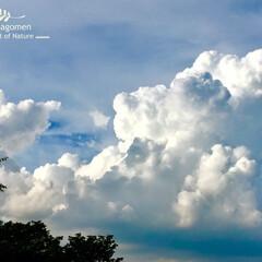 晴天/積雲/おでかけ/LIMIAおでかけ部/おでかけワンショット 積雲  今日は大きな積雲が凄かったです