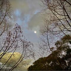 植物観察日記/メタセコイア/花水木/月と雲 メタセコイア・花水木と月と雲  昨日は朝…